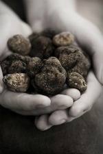 Handful of Truffles Picmonkey