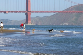 People Dogs Romp by GG Bridge Picmonkey