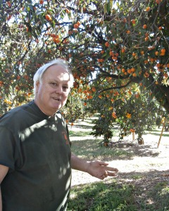 Tom Aguilar with old Mandarin tree Picmonkey