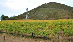 Calera Viognier vineyard in San Benito County