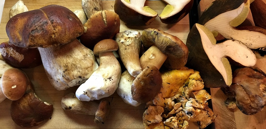 An array of Mendocino's finest wild mushrooms