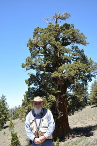 Ken Brunges Caretaker of the Bennett Juniper Picmonkey