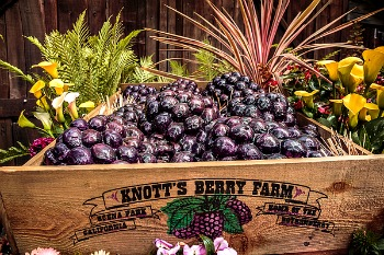 Knotts Berry Picmonkey