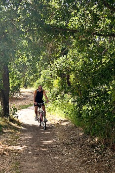cyclist on Napa Valley Vine Trail Picmonkey