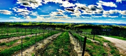 El Pomar District of Paso Robles