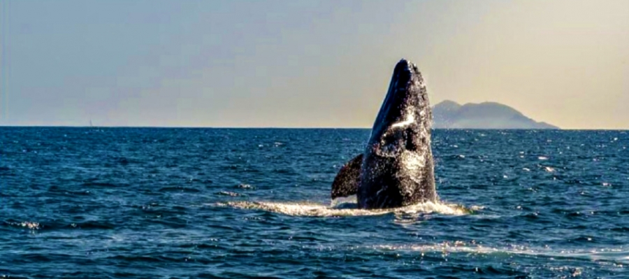 Year Round Whale Watching in San Diego