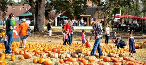 There's plenty of family activity at Indigeny's Fall Festival in Tuolumne County's Gold Country