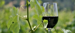 CA Wines Celebrate Sustainability in April