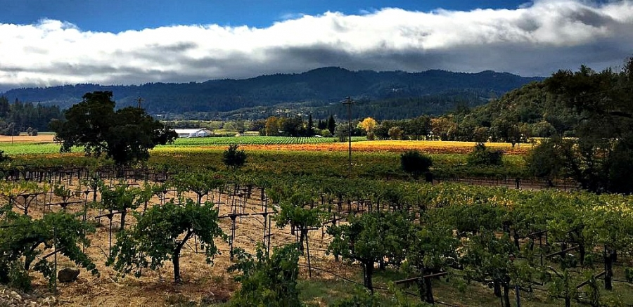 Napa Valley scene captured after recent fires