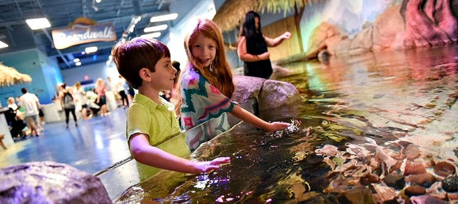 "Kids enjoy a ""hands-in"" aspect of their visit to Seaquest Interactive Aquarium"