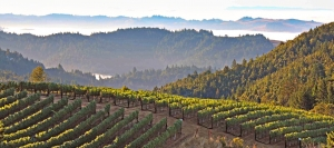 Sonoma County includes diverse topography among its appellations. This view is from a hilltop Fort Ross vineyard in the Sonoma Coast AVA