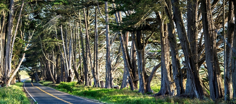 Highway One is a scenic option on the western side of Sonoma County
