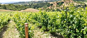 Paso Robles' Adelaida District