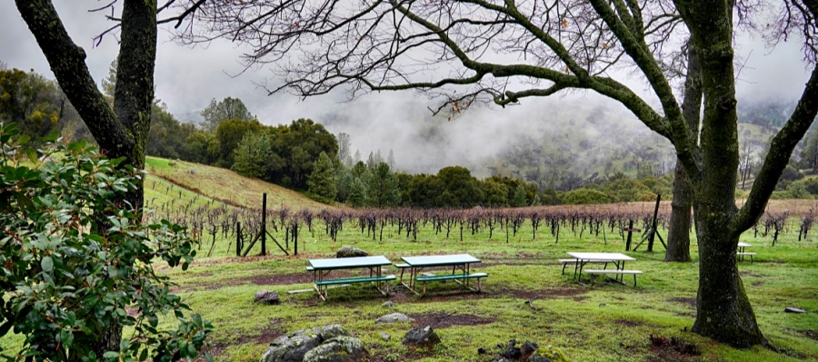 Picnic tables ovrerlooking vineyard at Story Wines are a bucolic sport to stop and taste