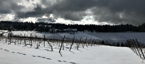 Wintery sky over Lava Cap Vineyards as El Dorado County awaits more snow