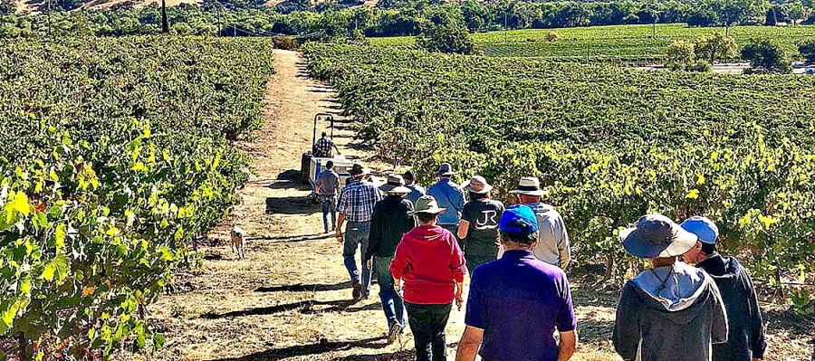 Guests enjoy  a Sonoma County vineyard tour at J. Rickards Winery during Experience Alexander Valley June 22-23.