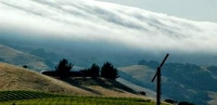 The Petaluma Gap AVA is defined by the daily wind and fog that moderates the area's temperature.