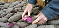 Purple sweet potatoes are surprise