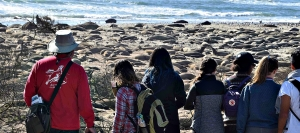 Visitors check out elephant seals at Ano Nuevo State Park