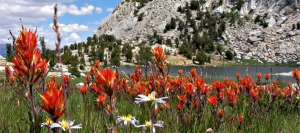 Tuolumne County Starts To Bloom